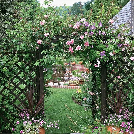Roses create a summer display housetohomecouk