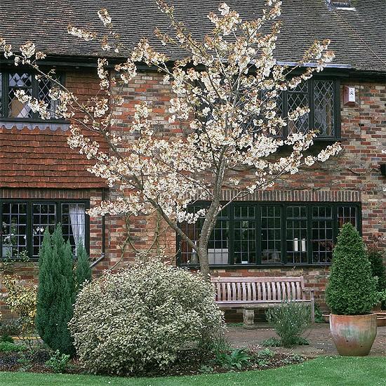 Japanese cherry tree | garden ideas | image