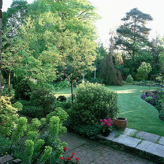 Formal Garden Design Idea: Birch Trees And Formal Lawn