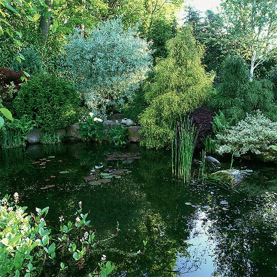 Mature pond | garden ideas | image