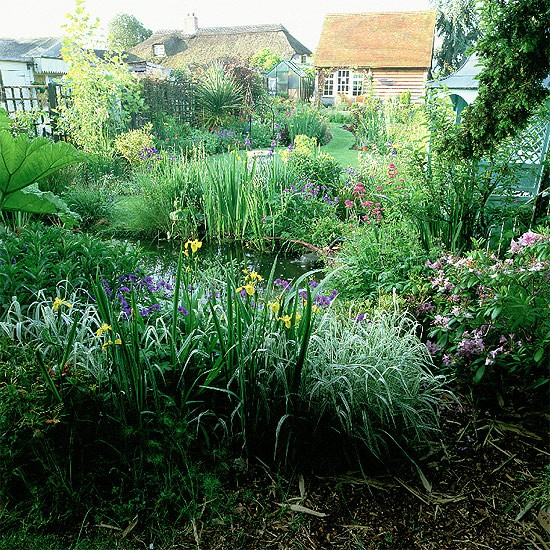 Pond edged with iris for Tranquil garden designs