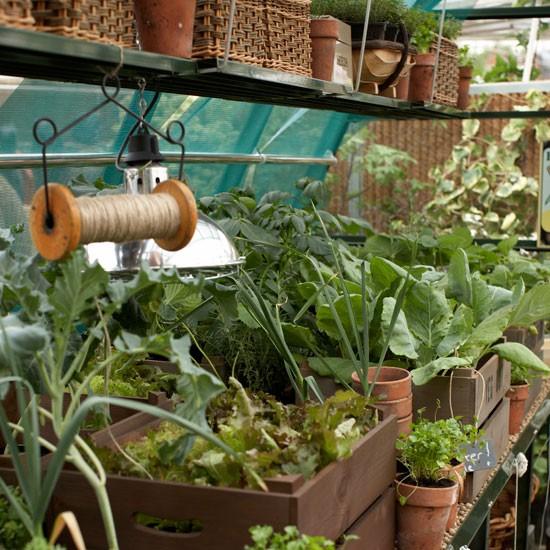 New Backyard Ideas : New year, new garden!  January gardening projects  Gardening ideas