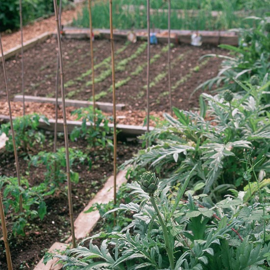 Dig a vegetable plot december gardening ideas 10 for Vegetable plot ideas