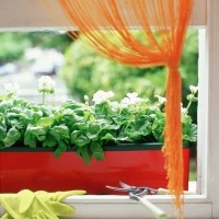 No-fail plants for hopeless gardeners
