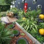 Quirky garden with water feature postbox, evergreen planting and grey wall with convex mirrors