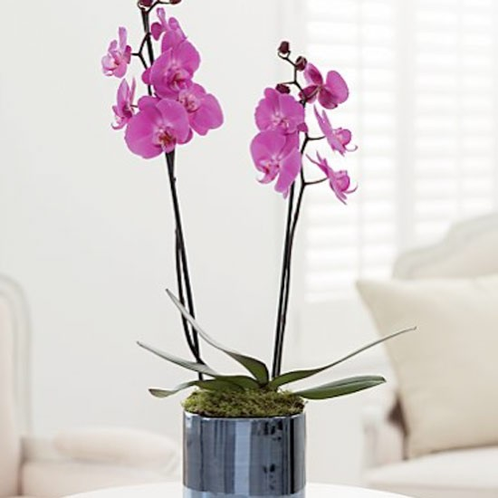 How to grow look after orchids love the garden - Best compost for flower pots solutions within reach ...