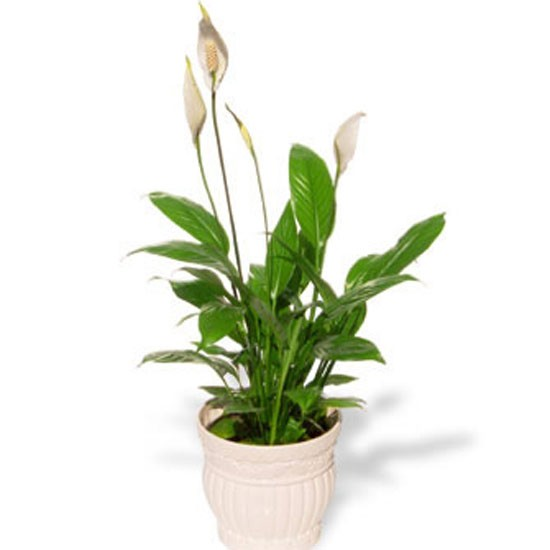 indoor plants house plants plants photo gallery