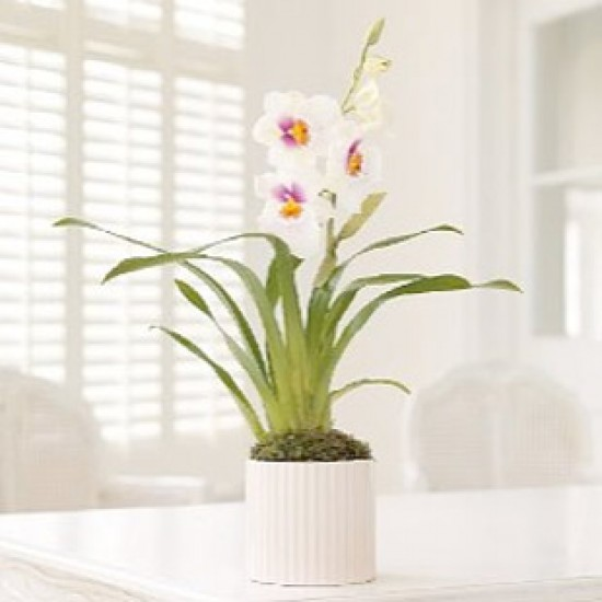 Indoor plants | House plants | Plants | PHOTO GALLERY | Housetohome.co.uk