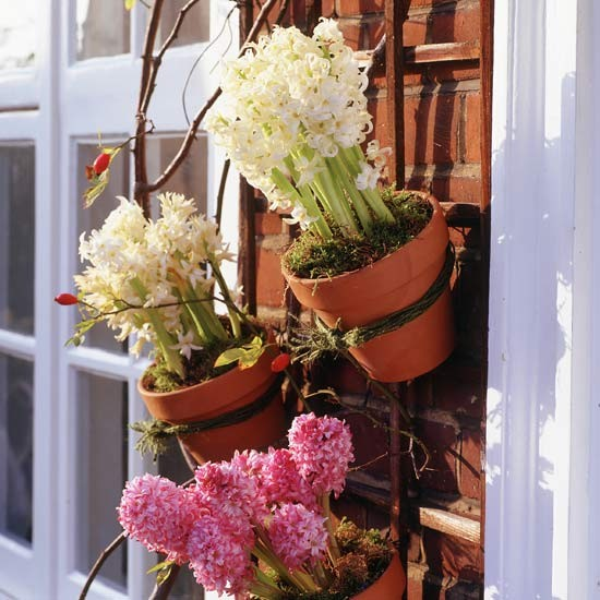 Digital Angle Finder >> Garden trellis with terracotta pot and bulb display ...