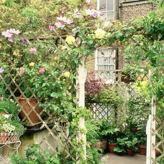 garden trellis with trailing roses and arch garden