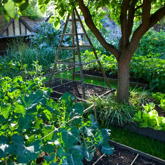 Garden allotment | Garden design | Vegetable garden | Image | Housetohome