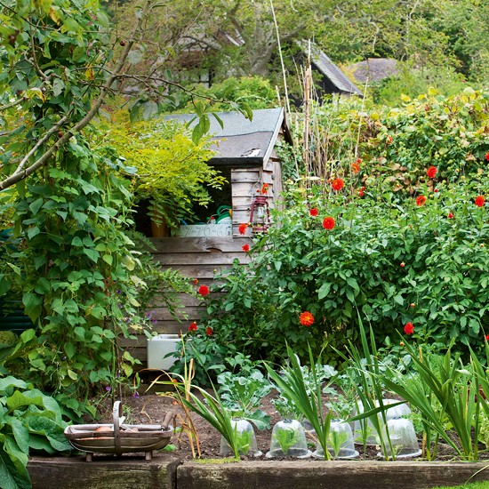 Vegetable garden with shed country cottage garden tour for Cottage garden design
