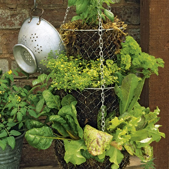 Grow salad leaves in hanging baskets