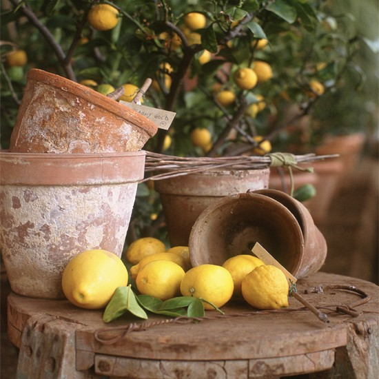 From buying a lemon tree to planting seeds, find local suppliers with our expert guide