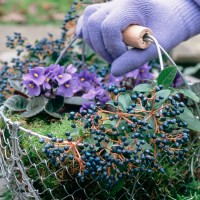 Jobs to do in the garden in February