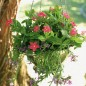 Hanging basket in metal filled with flowers in bloom