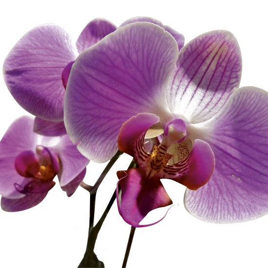 Orchids need light and warmth to survive