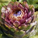 Cynara cardunculus are easy to grow and make a striking architectural feature for a border