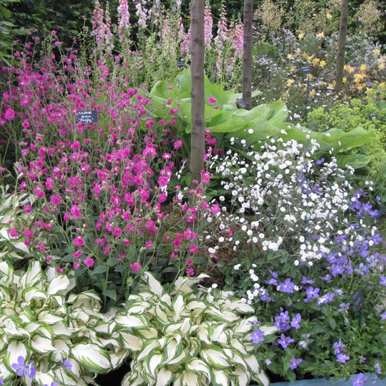 Hardy 39 s cottage garden plants chelsea flower show 2012 for Cottage garden plants