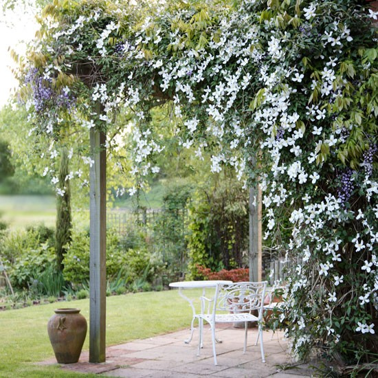 Grow over a pergola | In season: clematis | Garden idea | Homes & Gardens | Housetohome | PHOTOGALLERY
