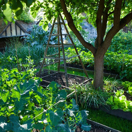 vegetable garden ideas uk