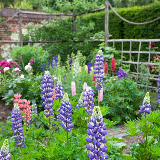 Lupins and peonies country gardens for Country garden designs pictures