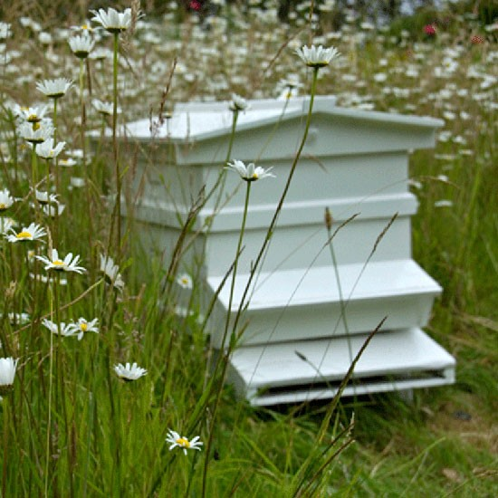 Make way for bees | July gardening jobs | Garden | PHOTO GALLERY | Homes & Gardens | Housetohome.co.uk