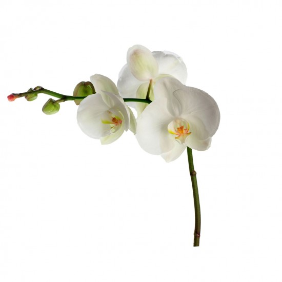 Orchid giant wall sticker from B&Q | Wall sticker | Wall Stickers | Wall Decal | Decals| PHOTO GALLERY | Style at Home | HousetoHome.co.uk