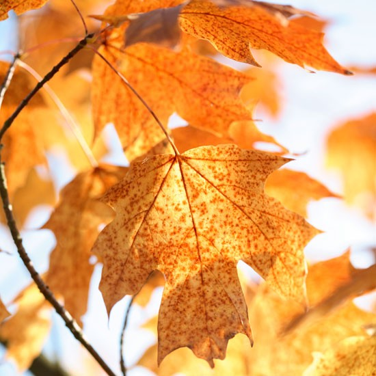 Speckled autumn foliage | Garden | PHOTO GALLERY | Homes & Gardens | Housetohome.co.uk
