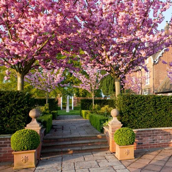 Spring blossoms | Spring garden | PHOTO GALLERY | Homes & Gardens | housetohome.co.uk