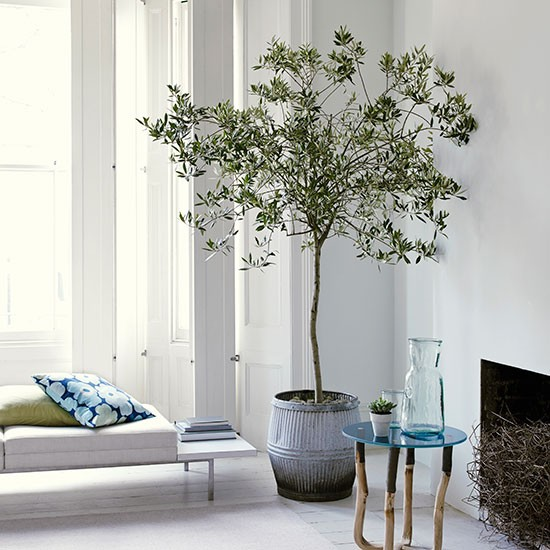 White Living Room With Olive Tree Housetohomecouk