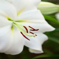 In season: white flower gardens