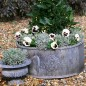 Two lead planters on graveled patio filled with pansies and herbs