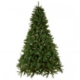 Christmas trees - 10 of the best