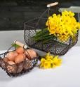 4 great spring gardening buys