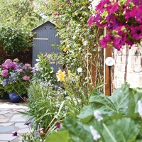 Courtyard garden with small grey shed