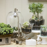 Succulent plants display with glass vases and domes