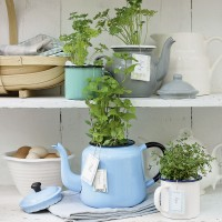 Vintage teapots potted with herbs