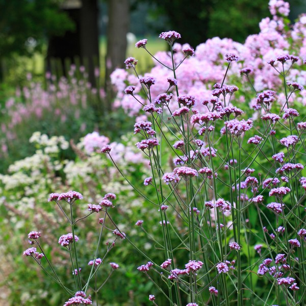 It's National Gardening Week - here's how to get in on the action | Ideal Home