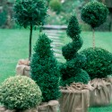 7 topiary-tastic country gardens